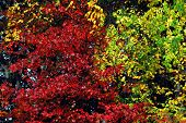 A Beautifully Colorful Example Of Various Trees With Contrasting, Brightly Colored Fall Leaves, In N poster