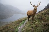 Landscape Image Of Red Deer Stag By Lake And Mountain Range In Autumn poster