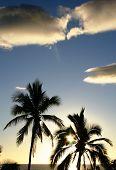 Blue Palm Tree Sky poster