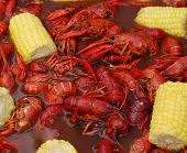 pic of crawdads  - Crawfish boil - JPG