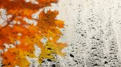 Multicolor Maple Leaves Through The Window Glass Filled With Rain. Texture Of Water In Heavy Rain. W poster