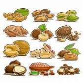 Vector Set Of Nuts, 12 Cut Out Assorted Heap Of Abstract Hazel Fruits For Healthy Nutrition, Collect poster