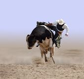 Cowboy Falling off a Bull isolayed with clipping path