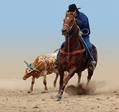 stock photo of broncos  - Cowboy Successfully Roping a Steer isolated with clipping path - JPG