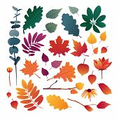 Set Of Autumn Leaves. Design Elements Of Red Color For The Autumn Season. Silhouettes Of Maple Leaf, poster