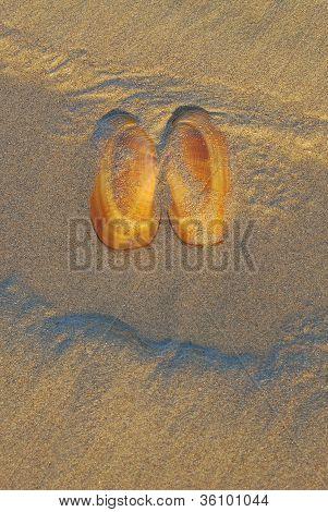 Sandshell Eyes