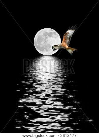 Águila volando a la luna llena