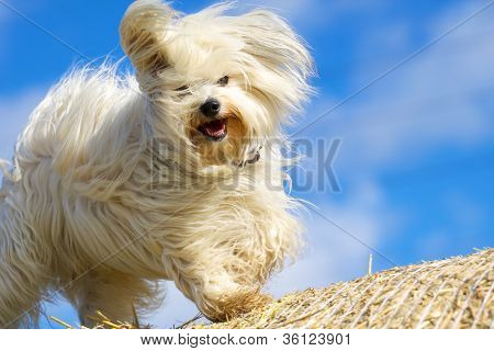 Funny dog ??playing