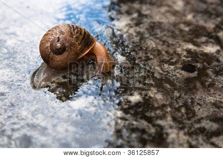 Snail With Horns On The Right Side