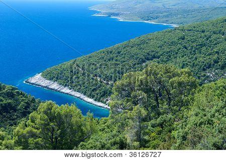 Pine coast
