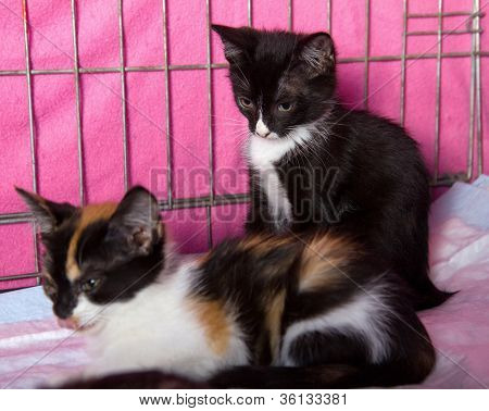 Two Kittens In A Cage