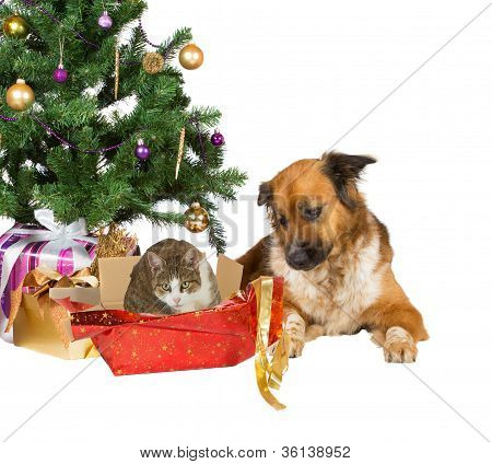 Cat And Dog Opening Christmas Gifts