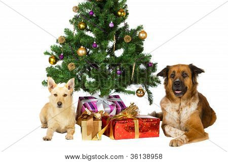 Happy Dogs Under The Christmas Tree