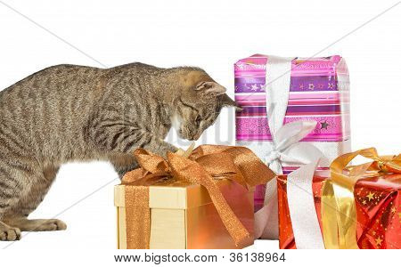 Cat Inspecting Christmas Presents