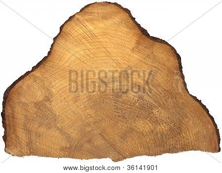 Section Of Tree Trunk Isolated