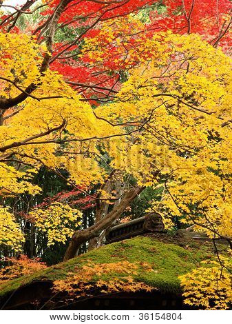 Colorful Maples And The Green Moss Roof Of Kotoin Temple