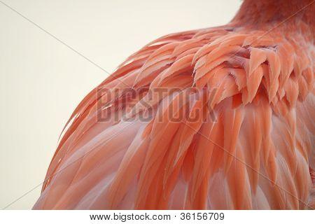 Flamingo's Feathered Back