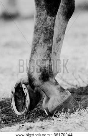 Horse legs and horseshoe