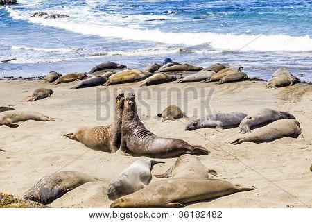 Lobos marinos en la playa