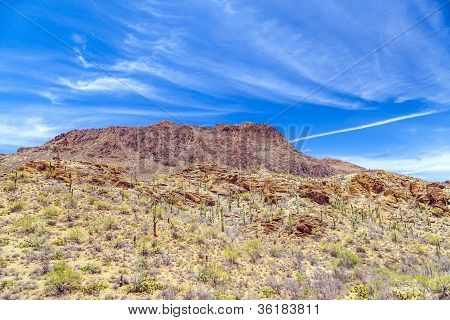 Beautiful Mountain Desert Landscape With Cacti