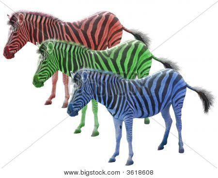 Tres cebras africanas colores rojo verde azul de Ang aislado sobre fondo blanco