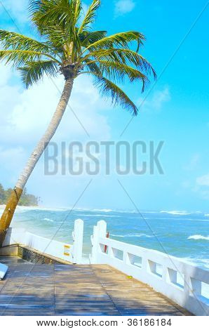 Coconut tree on the shore of the Indian Ocean