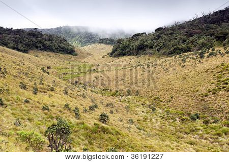 Mist Forest, Savanna, And Clouds At Horton Plains