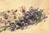 image of lobelia  - Beautiful vintage background with blooming lobelias and teacup - JPG