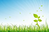 picture of glorious  - Illustration of a single green young plant in the open green field in a glorious day - JPG