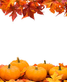 picture of fall leaves  - Fall leaves with pumpkin on white background fall harvest frame - JPG