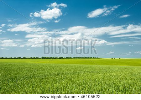 summer landscape. beautiful green field and clouds