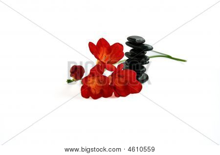 Balancing Stones And Red Day-lilies Isolated Over White.