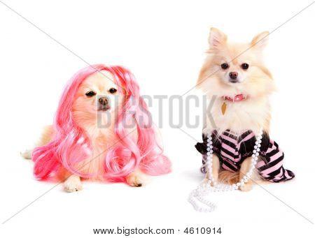 Perros de la Diva