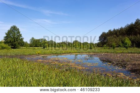 landscape with Swamp in forest