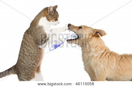 Cute Cat Cleaning A Dogs Teeth