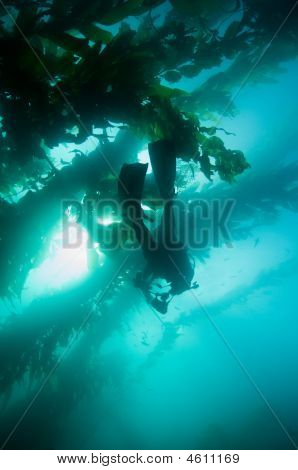 Underwater Scuba Photographer