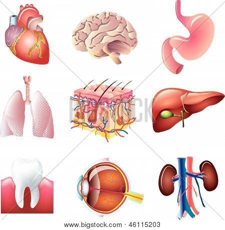 human body parts detailed vector set
