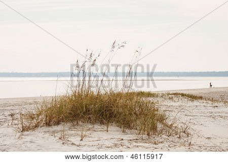 Patch Of Sea Oats On Beach Dune