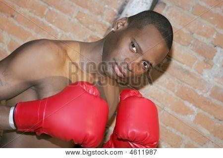 Boxer Guy