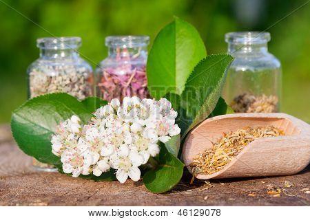 Healing Herbs In Glass Bottles, Herbal Medicine