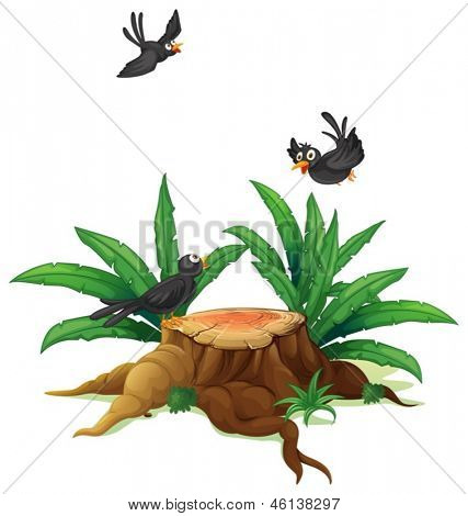Illustration of a stump with three black birds  on a white background