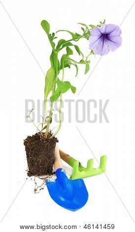 Seedlings and tools gardener isolated on white