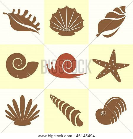 sea shells and snail