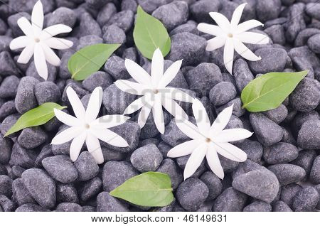 White Jasmine Flowers And Leaves Over Zen Stones Background