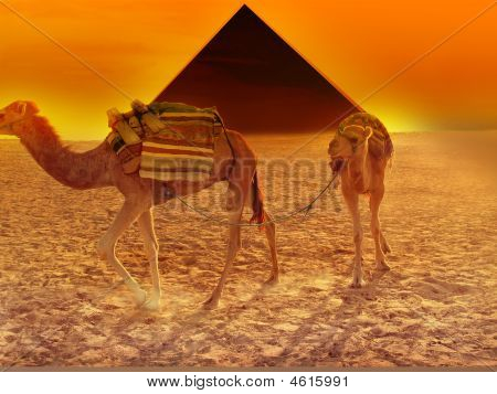 Golden Pyramid Desert Camel