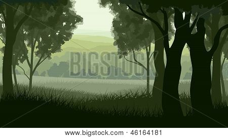 Horizontal Illustration Within Greenwood Forest.