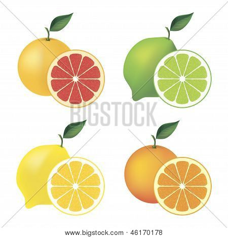 Vector citrus set