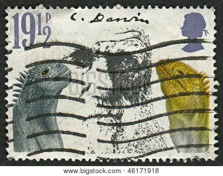 UK - CIRCA 1982: A stamp printed in UK shows image of the Darwin and Marine Iguanas. Death Centenary of Charles Darwin, circa 1982.