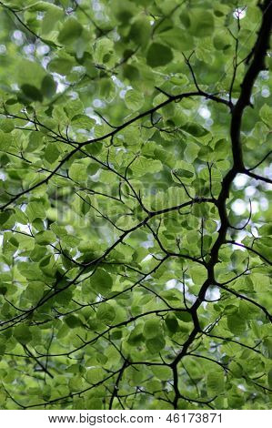 Underside view of leafy green branches on tree.