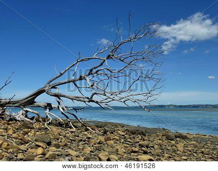Fallen tree at a shore